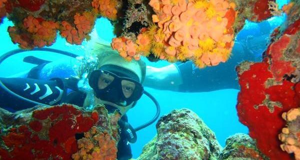 Scuba Diving Aruba, Caribbean