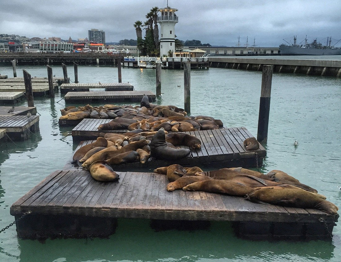 Pier39: one of the must see places in San Francisco