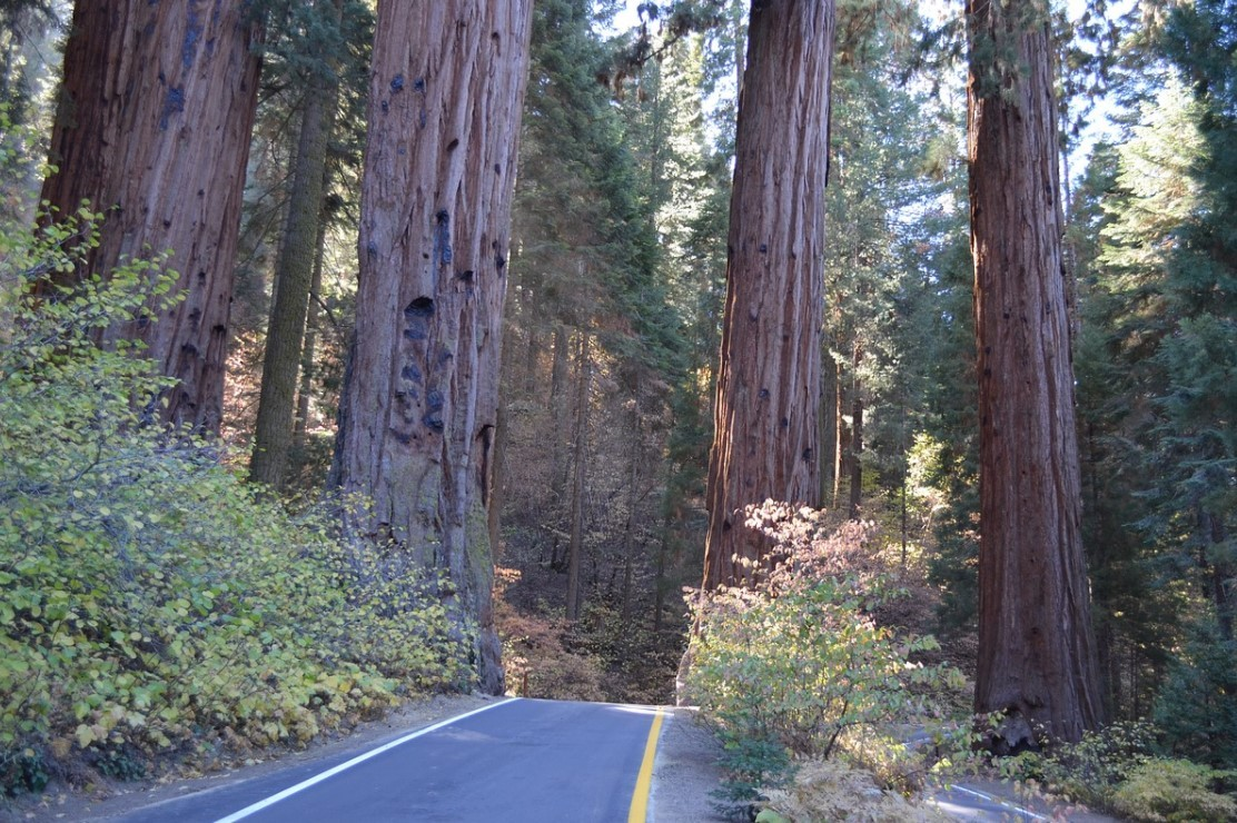 Best camping spots in California: Sequoia National Park