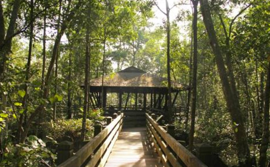 What to do in Singapore: Sungei Buloh Wetland Reserve
