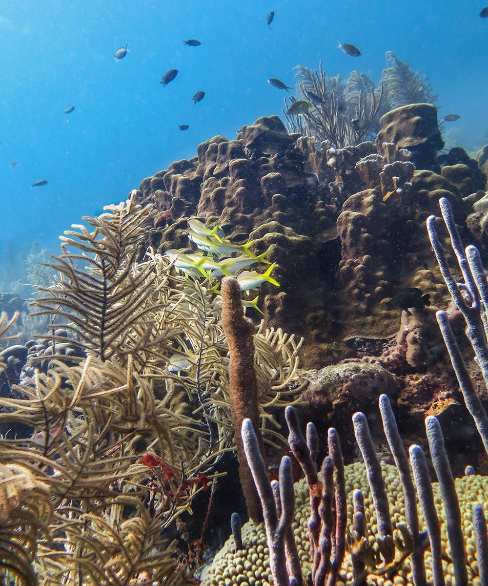 Rappel: a Bonaire dive site