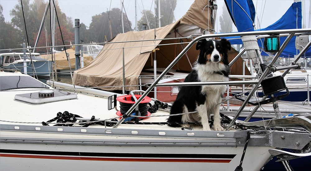 dog on a sailboat