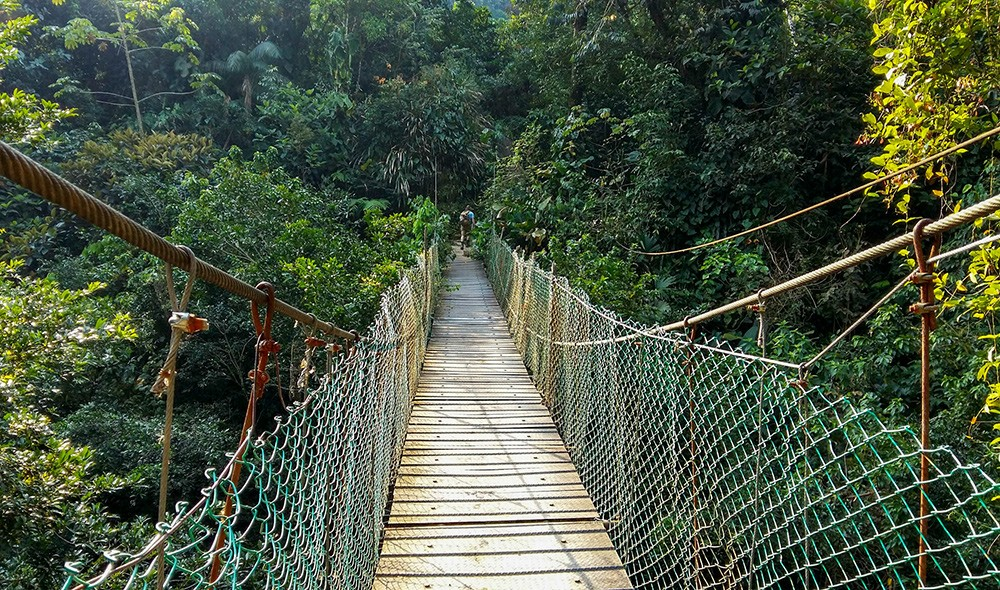 abridge at the lost city trek, Colombia