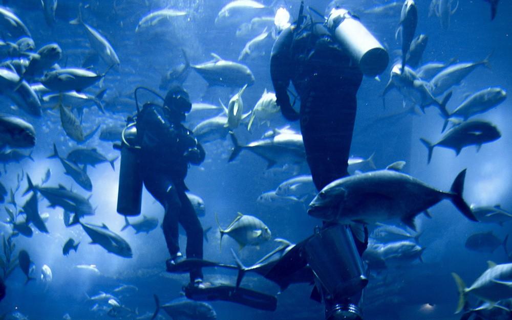 divers inside the Dubai Aquarium