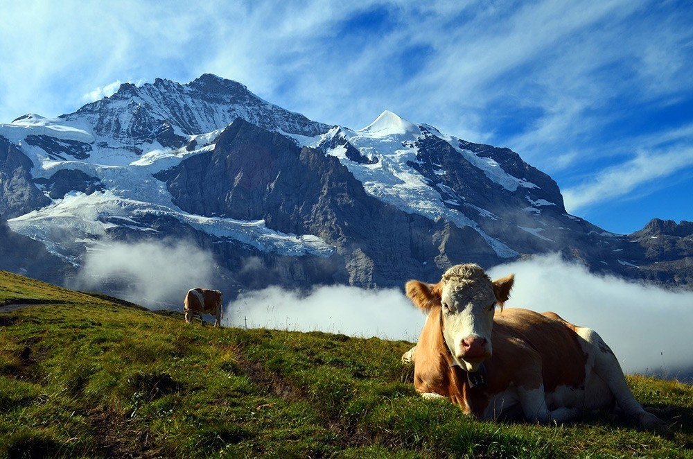 Most beautiful places in Switzerland: Grindelwald