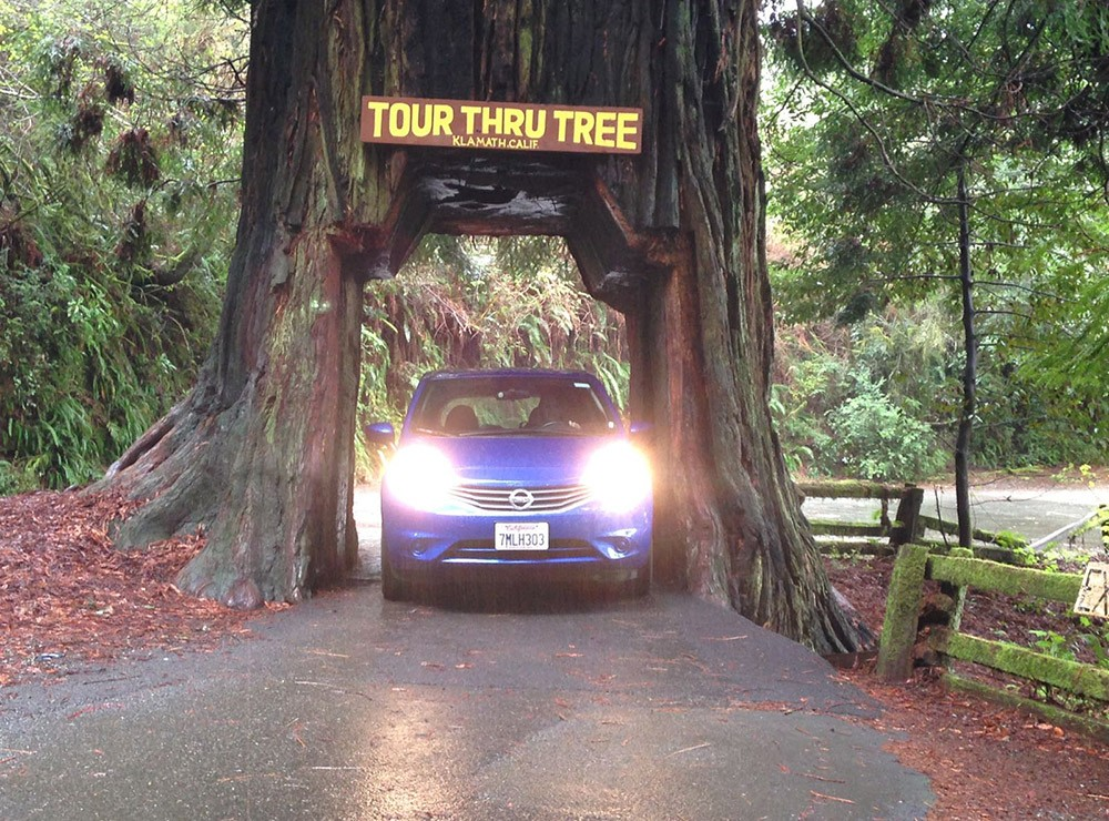 where to find the drive through redwood tree