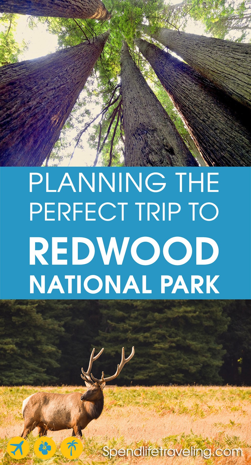 How to visit Redwood National Park in California
