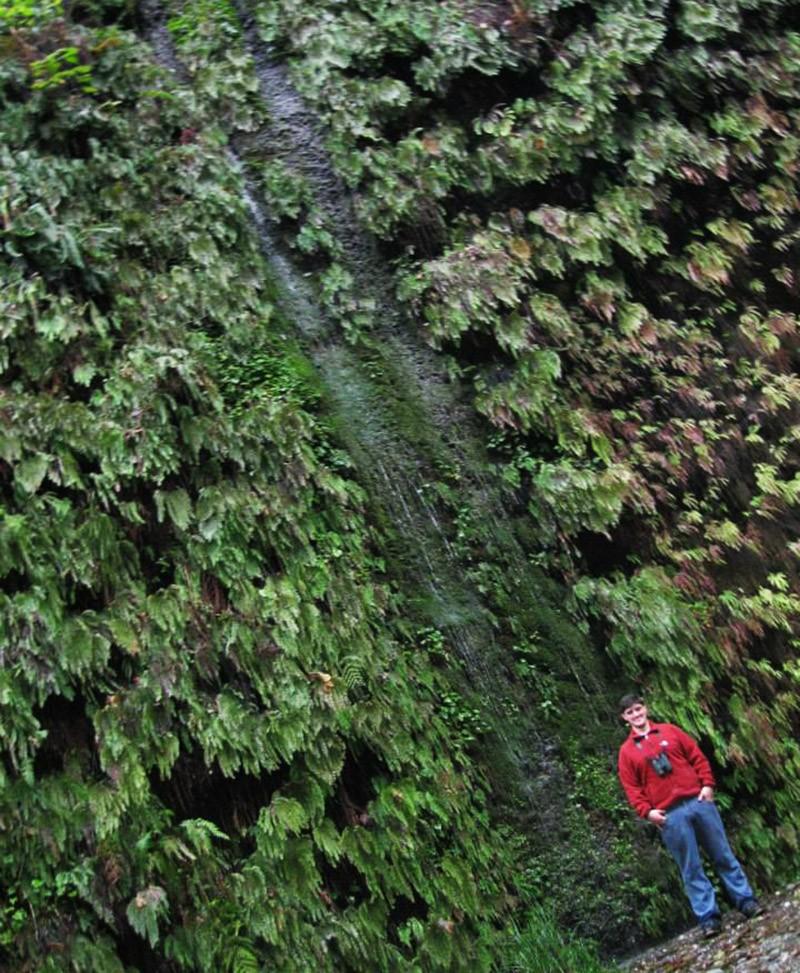 Redwood National Park hiking: Fern Canyon