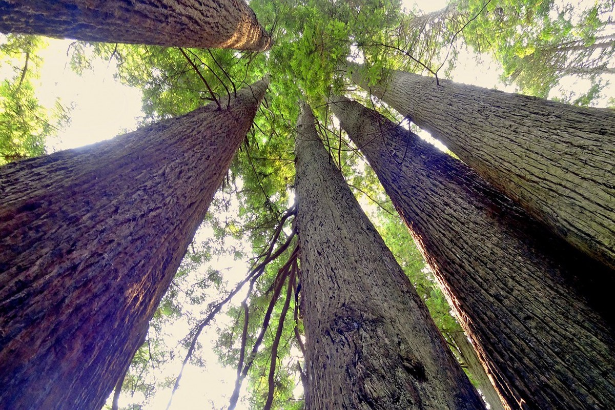 visiting Redwood National Park, California