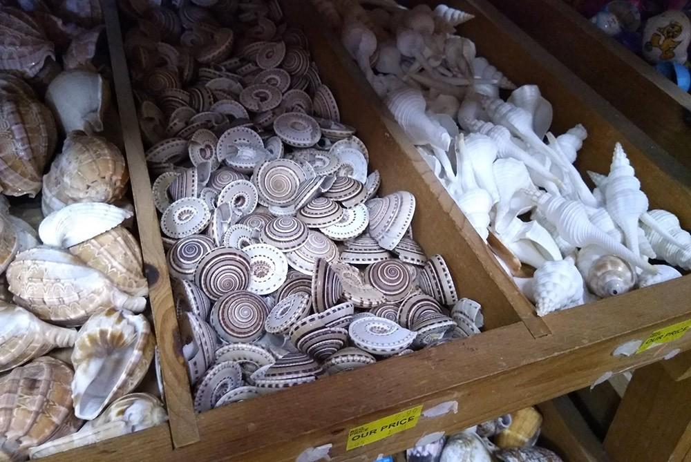 you shouldn't buy seashell souvenirs