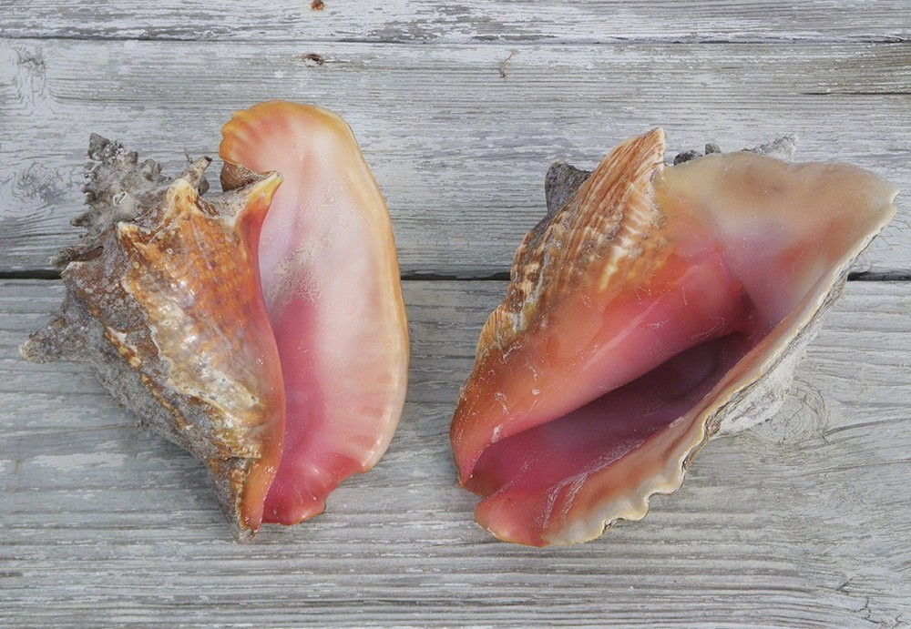 the importance of seashells