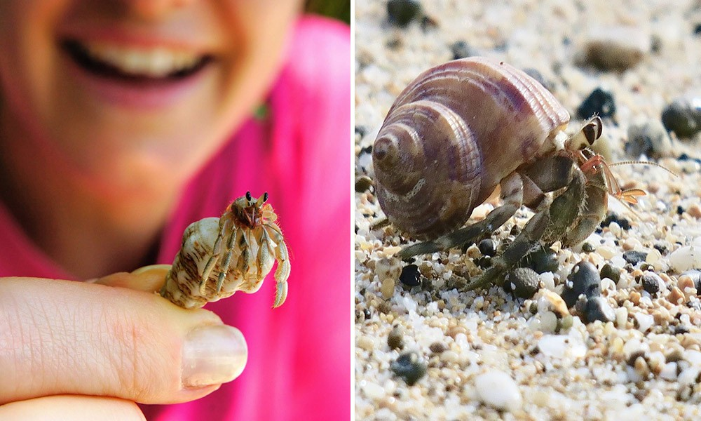 ways to protect marine life: don't take shells from the beach