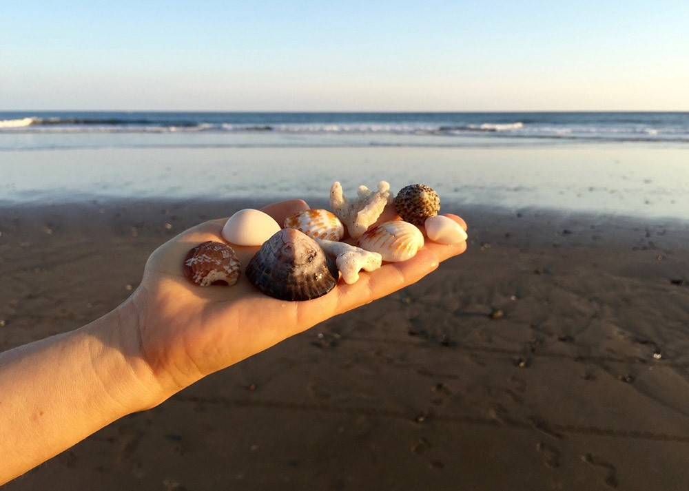 why you shouldn't take shells from the beach or buy them