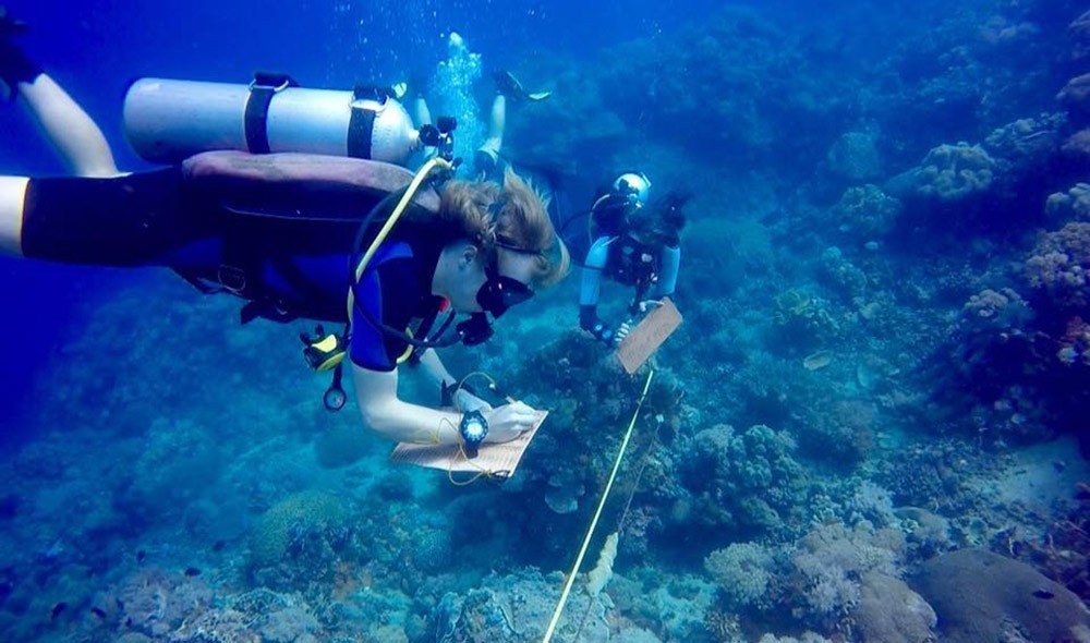 volunteering in the Philippines with Marine Conservation Philippines