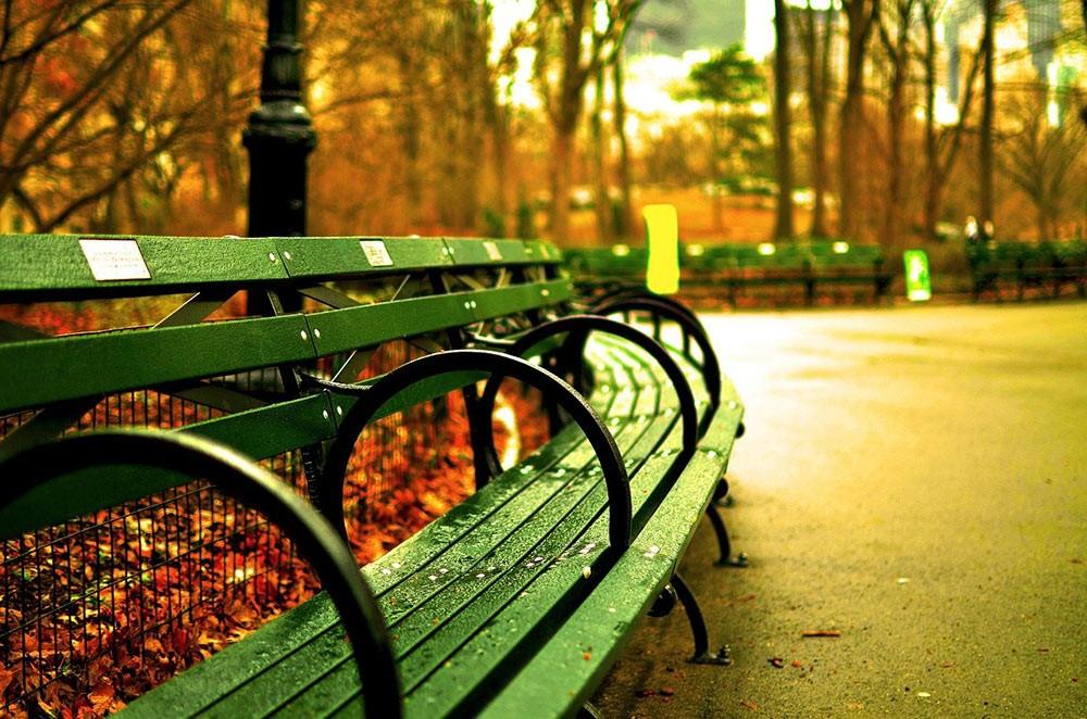 rain in Central Park